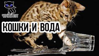 Приколы про кошек: кошки и вода / Интересные факты о кошках