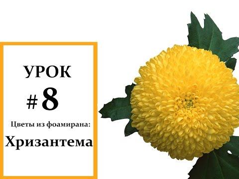 Цветы хризантемы. Pink chrysanthemum - Популярные комнатные, домашние растения и цветы