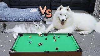 강아지와 고양이의 당구대결!!  과연 승자는...??
