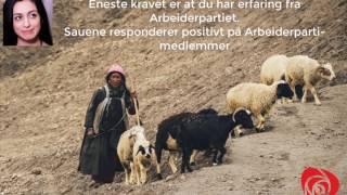 Sauegjeter i Pakistan tilbyr Hadia Tajik fast jobb
