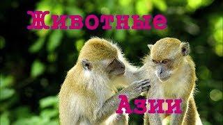 Животные Азии. Видео для детей от 4 лет.