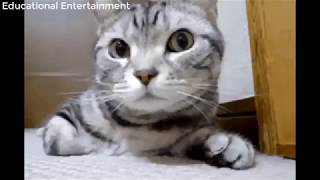 Best Cats and dogs Funny Videos