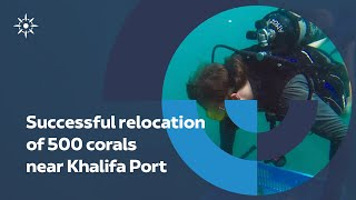 Successful relocation of corals I Abu Dhabi Ports