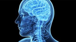 видео Анатомия человека: составляющие организма