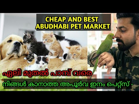 Pet Market Abudhabi / The Best Pet Market Market in the World/Dubai Pets/Exotic Pets Dubai Pet World