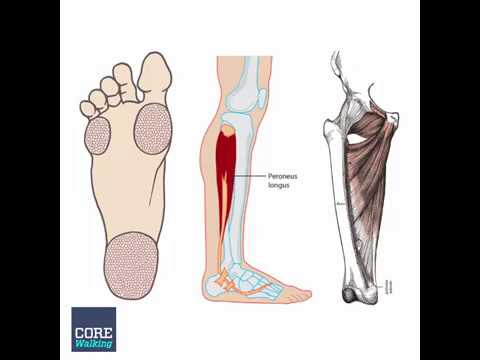 1 Minute Anatomy Inner Foot Outer Calf Inner Thigh Youtube