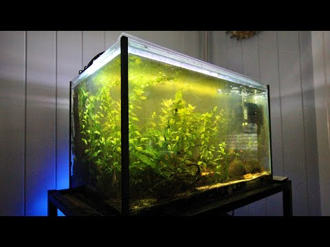 20 Gallon Apistogramma Aquarium (Update)