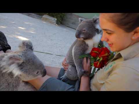 Koalas take Valentine's Day to the next level