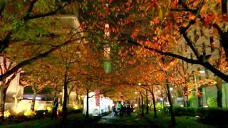 東京スカイツリー   ライトアップ  山谷堀紅葉回廊 桜紅葉 2017   Tokyo Skytree Light up  Christmas