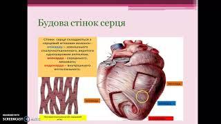 Урок на тему: Органи кровообігу. Серце, його будова і функції. Робота серця