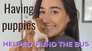 Raising Puppies 08 weeks.