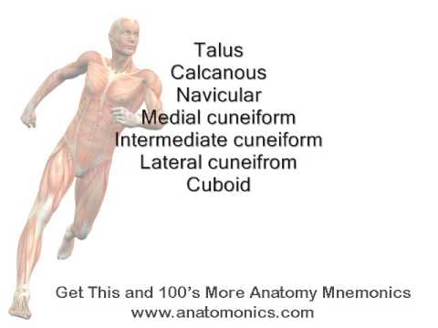Tibia Muscles Of Pes Anserinus Mnemonic Youtube