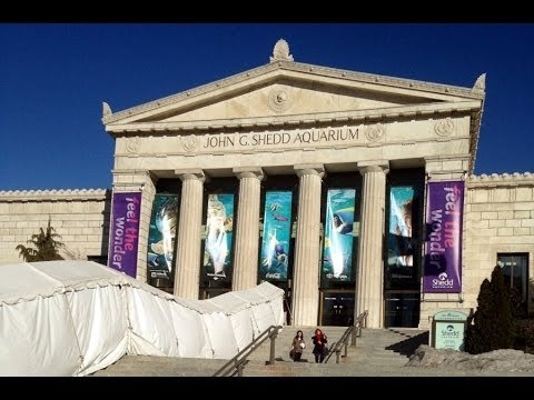 The Shedd Aquarium In Chicago, IL 2014