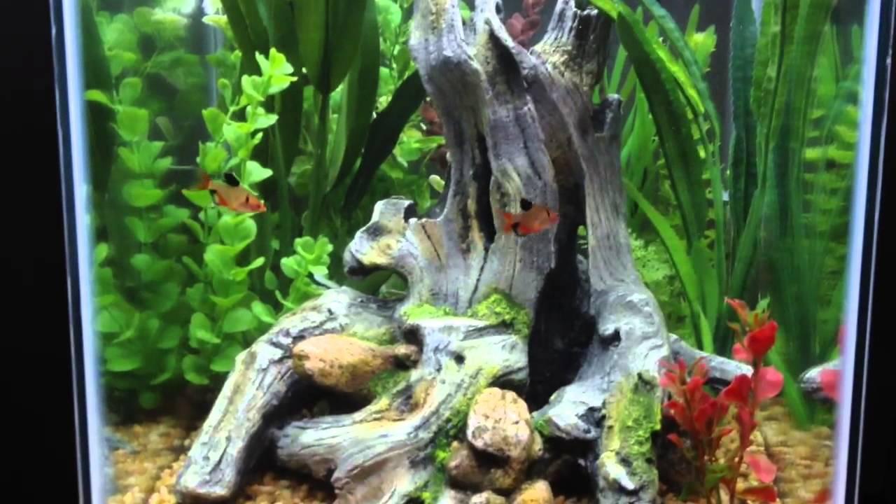 15 gallon column tank youtube for 15 gallon fish tank