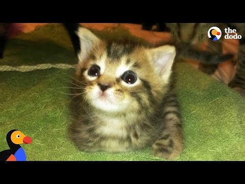 T Rex Kitten Finds The Best Dad Ever | The Dodo