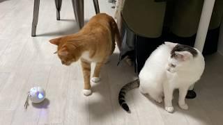 [cat vlog] 새로운 장난감에 깜짝 놀란 고양이