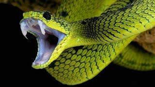 Van Vihar Bhopal | Snakes | Cobra, Rat Snakes, Russel Viper, Python | Smart City Bhopal | Bairagarh