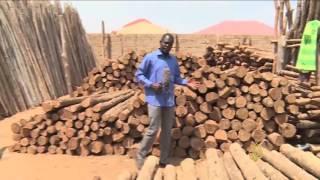 جهود بجنوب السودان لمواجهة خطر التصحر