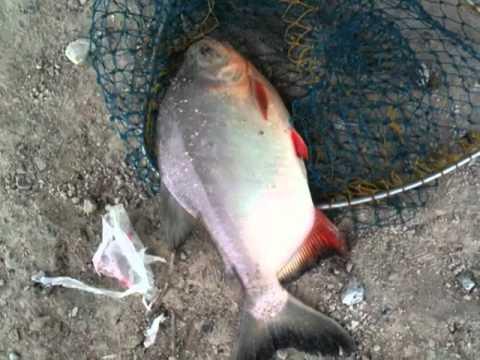 Mr.Thái Câu cá chim Hồ Thanh Phương Q7