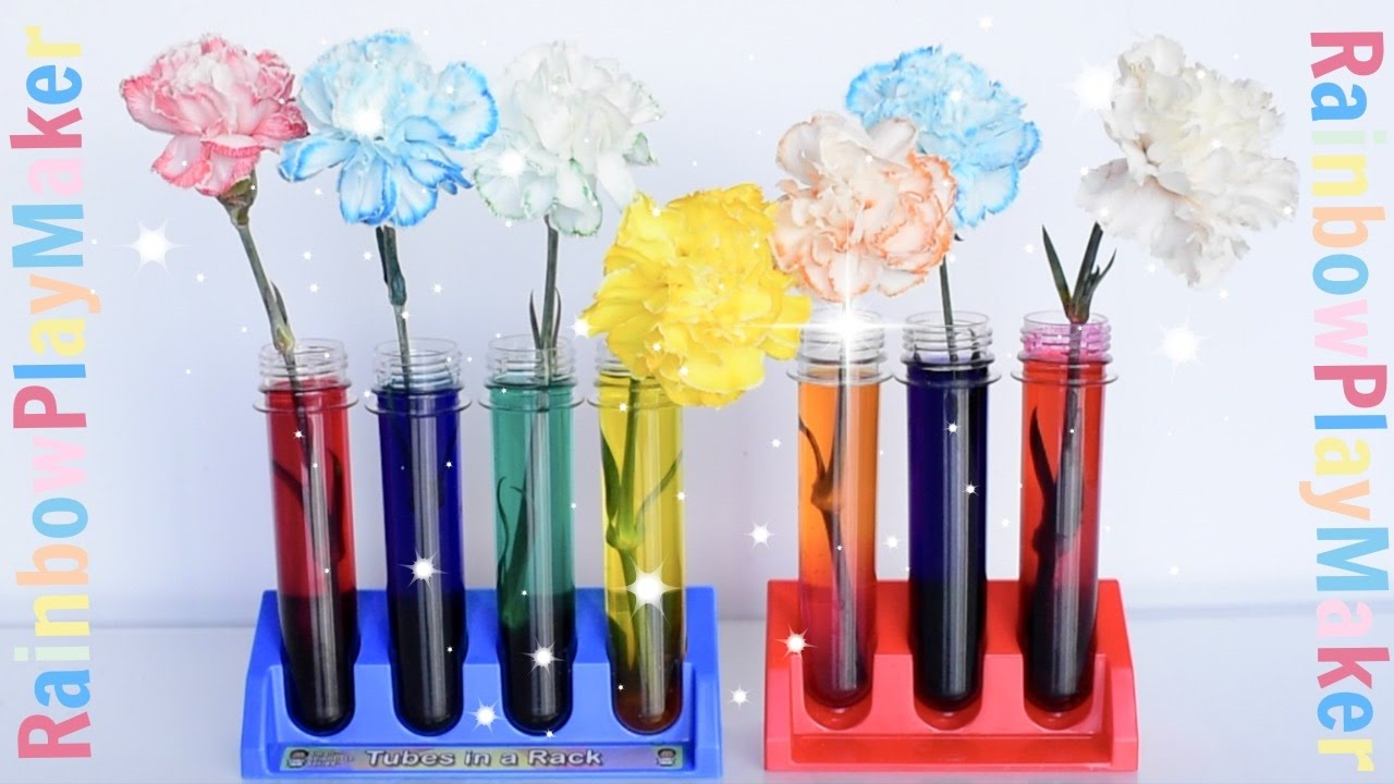CARNATIONS RAINBOW COLOR CHANGING ♥ DIY SCIENCE EXPERIMENT ...