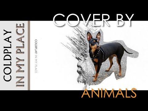 Coldplay - In My Place (cover by animals)