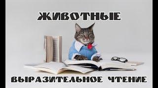 Урок 6 / Хакасская речь и немного теории / Школа хакасского языка