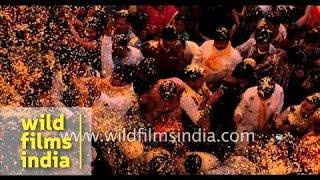 Safer Holi with flower petals and no colours! Kesi Ghat, Vrindavan
