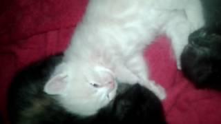 Что снится котятам? Спит с открытыми глазами!!!!!