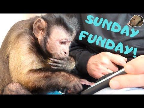 Monkey Sunday FUNDAY