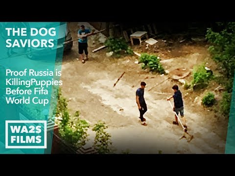 Proof Dog Hunters Are Killing Stray Puppies In Russia World Cup Cities Today! The Dog Saviors
