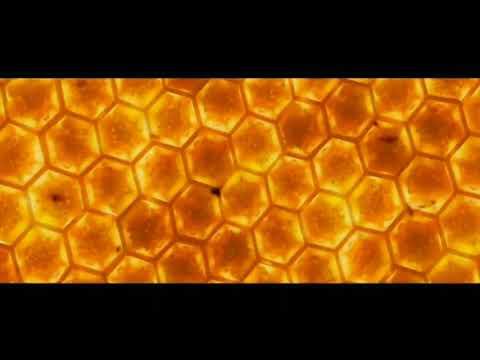 Rasa-Пчеловод ГРОМКАЯ ВЕРСИЯ