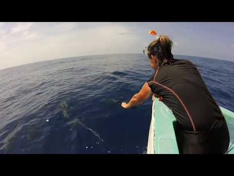 Paradise on Moheli Island, Comoros | LAKA LODGE