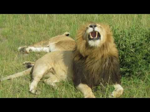 Afrique 2014 Jambo Kenya 1 Nairobi + Village Maasai + Massai Mara