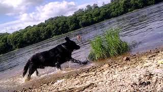 кабель  восточно-европейская овчарка) Учимся плавать