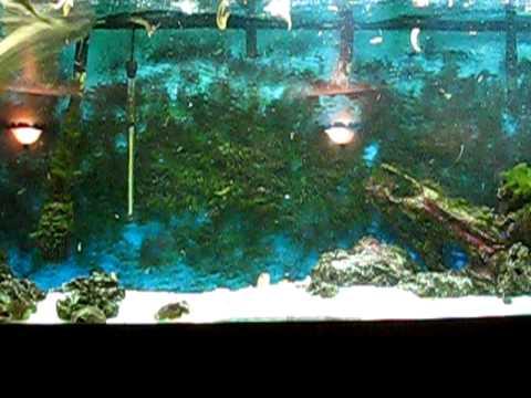 bamboo shark tank - photo #10