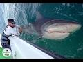 Powerlifter vs Giant Bull Shark