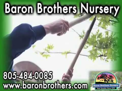 Baron Brothers Nursery Camarillo Ca