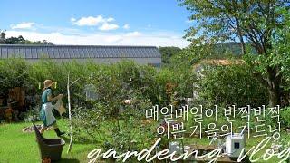 ENG) [양평전원주택] 매일이 반짝반짝, 예쁜 가을의…