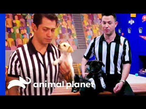 How To Become The Puppy Bowl Referee | Puppy Bowl XVI