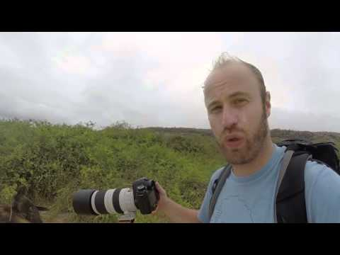 Canon 100-400mm f4.5-5.6 ii IS Review from the Galapagos Islands