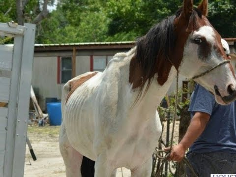 From Abused to Adored - Rescue Horse Story