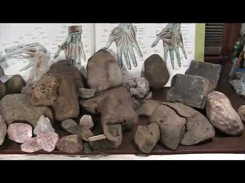 Mudfossils Part 2