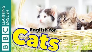 English for Cats 🐱🐱🐱