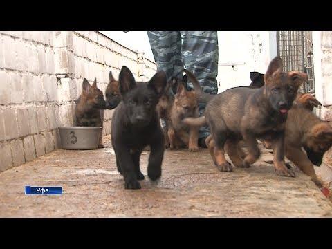 В уфимском центре кинологической службы родились 40 щенков