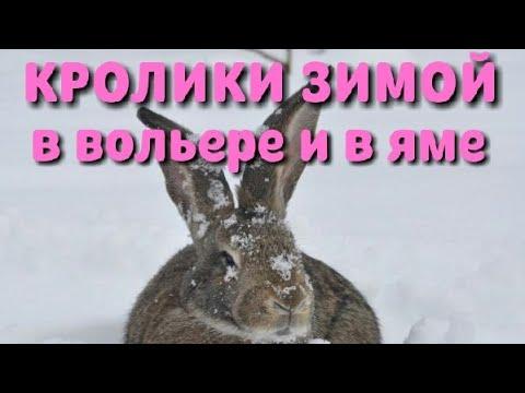 Кролики зимой в вольере и в яме. Обзор зимнего содержания. А ещё вкусный кофе на кофемашине Krups.