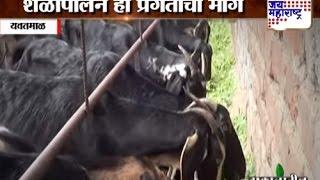 Palvi: Goat farming in Yavatmal