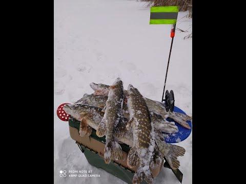 НИКТО НЕ ОЖИДАЛ.......Бешеный жор щуки Новогодние жерлицыБезумная щука Рыбалка зимой 2020