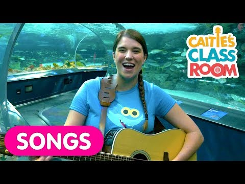 Sing The Ba Shark Song With Real Sharks At The Aquarium!