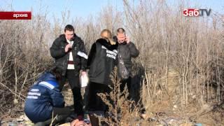 Бездомные собаки вновь напали на школьника  в Чите