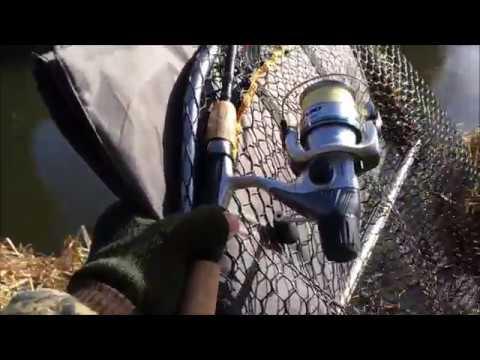 Pike Fishing - Basingstoke Canal